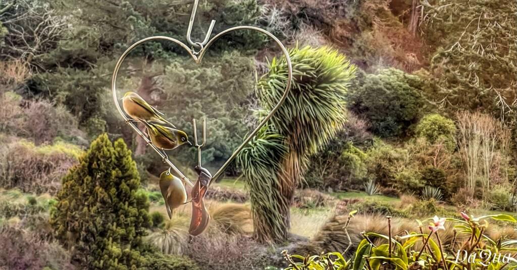 Silvereyes – songbirds native to New Zealand and Australia