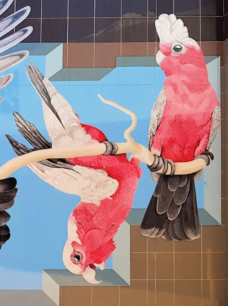 Galahs - Artist Alison Hittmann
