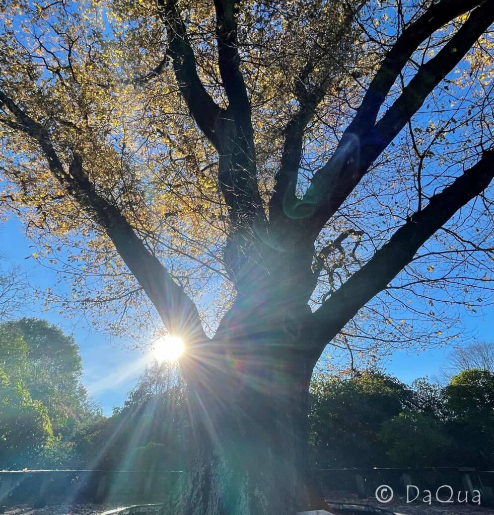 Autumn Passion by DaQua