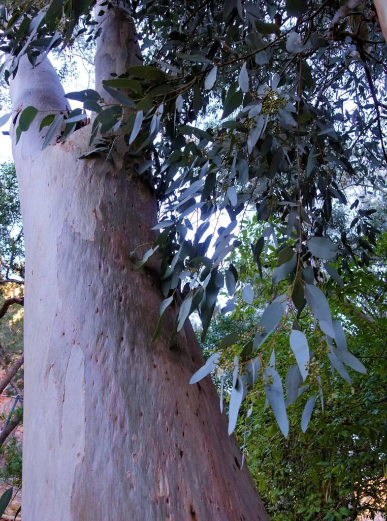 Angkerle Atwatye (Standley Chasm), NT