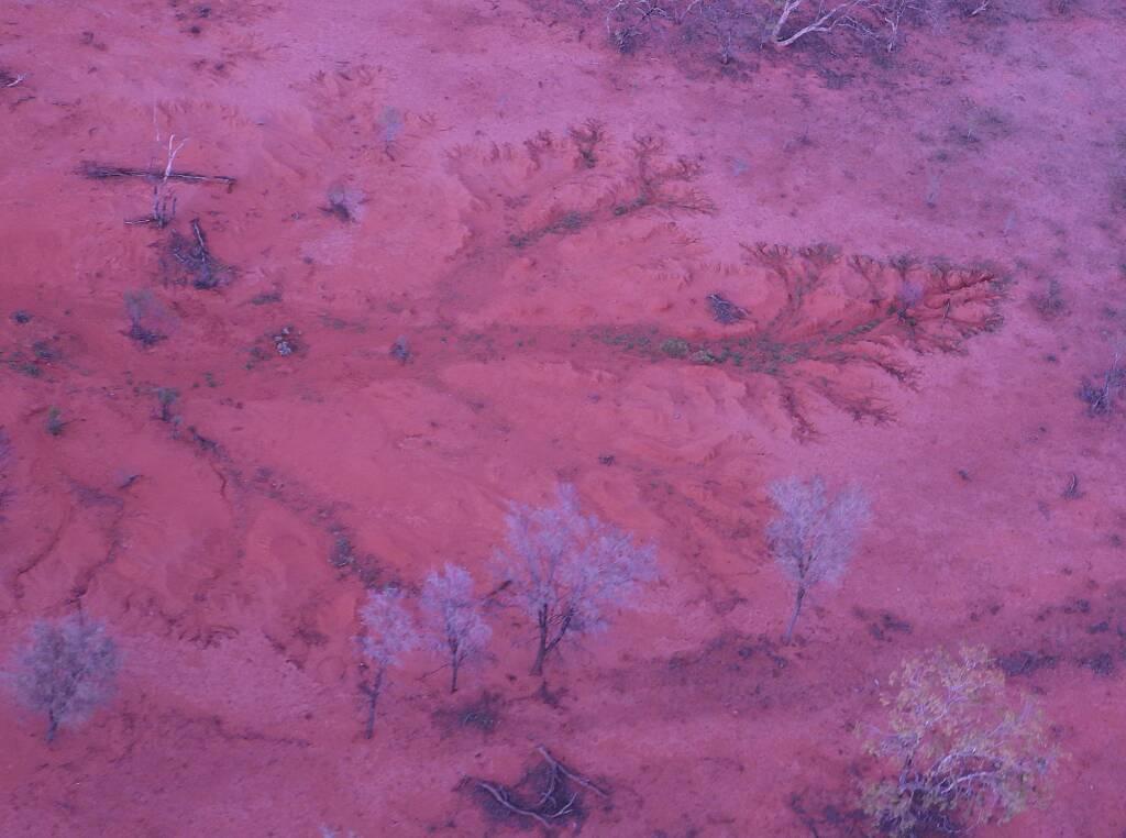 Tree in the landscape, Alice Springs, Central Australia