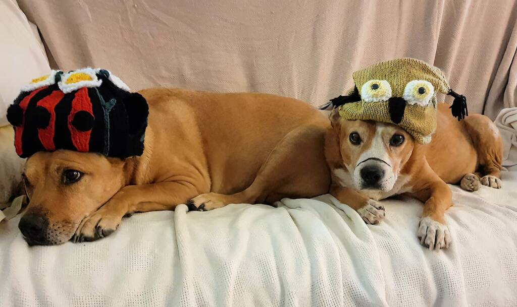 Camp dogs and beanies - Alice Springs Beanie Festival