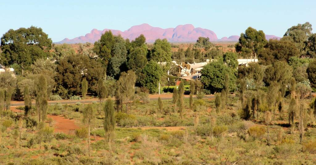 Young desert oaks in foreground with Kata Tjuta in background
