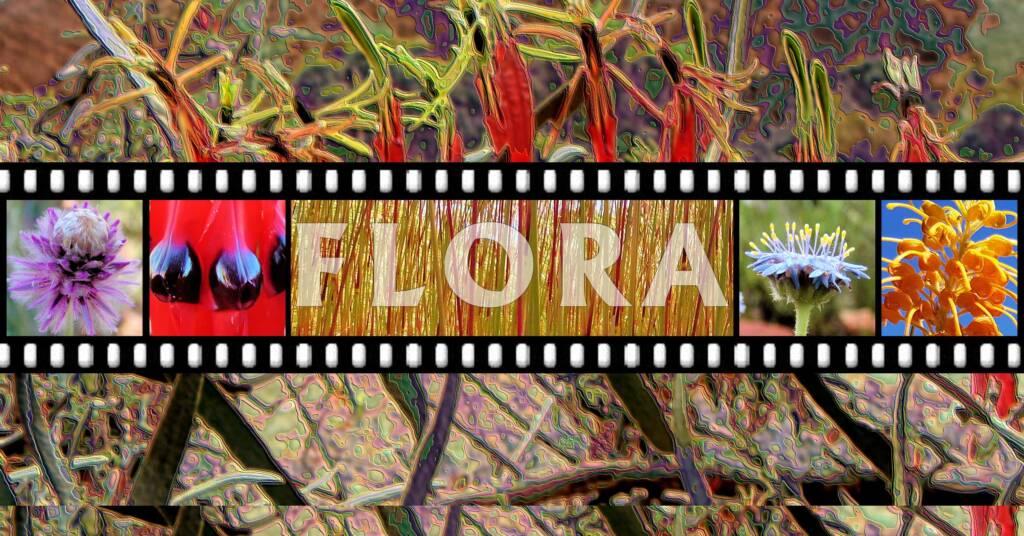 Ausemade Flora Glossary