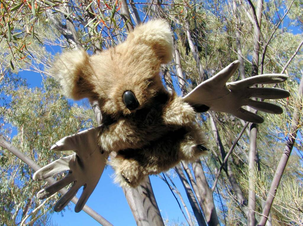 Furry Angels by artist Jenny Taylor (2008 Exhibition, Olive Pink Botanic Garden, Alice Springs)
