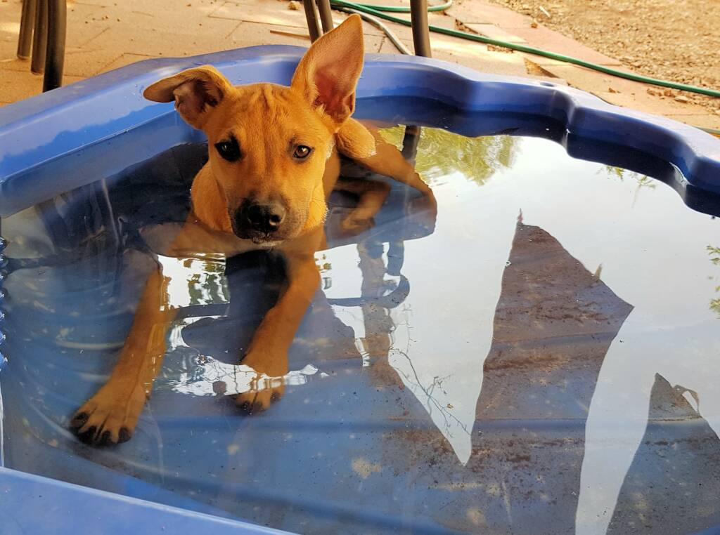 I love cooling down in my pool.