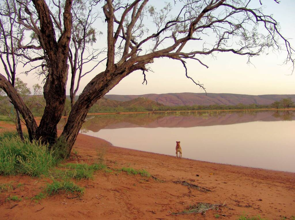 At Ilparpa Claypans with your pet dog, Alice Springs, NT