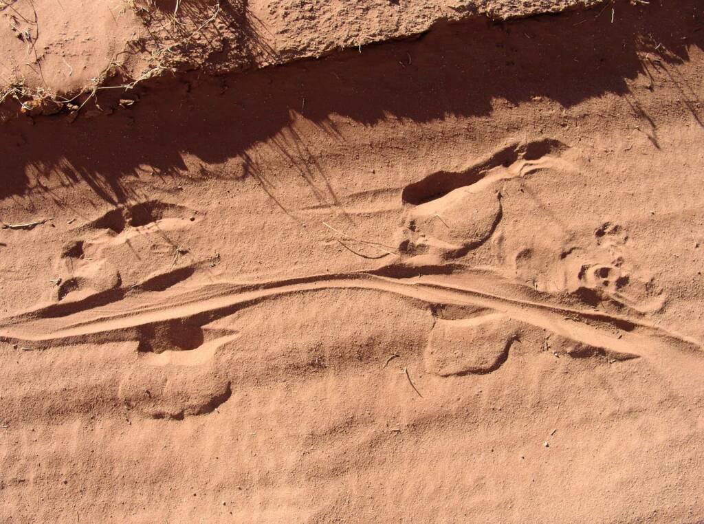 Kangaroo tracks, Owen Springs Reserve, NT