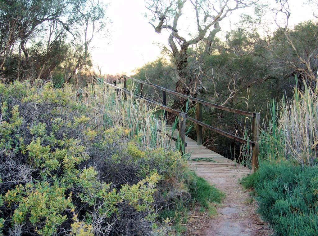 Idnjundura Kingfisher Spring Walk
