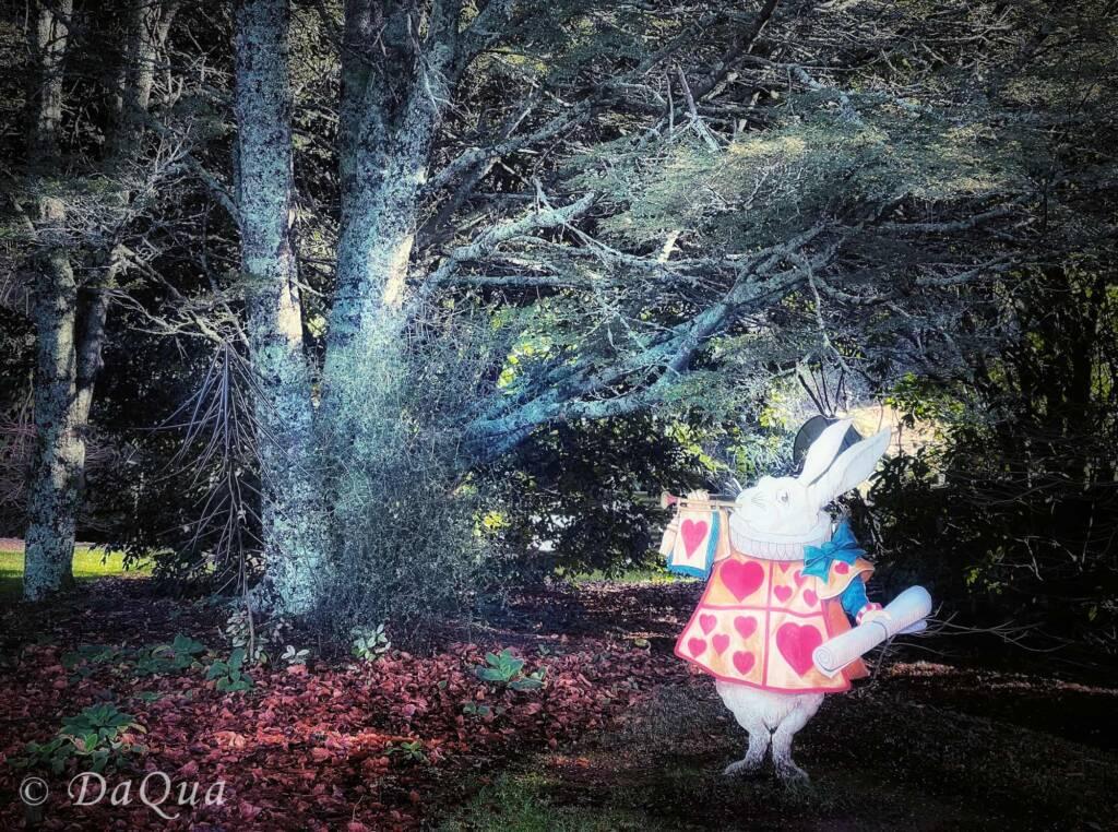 White Rabbit, Alice of Wonderland - Larnach Castle Gardens