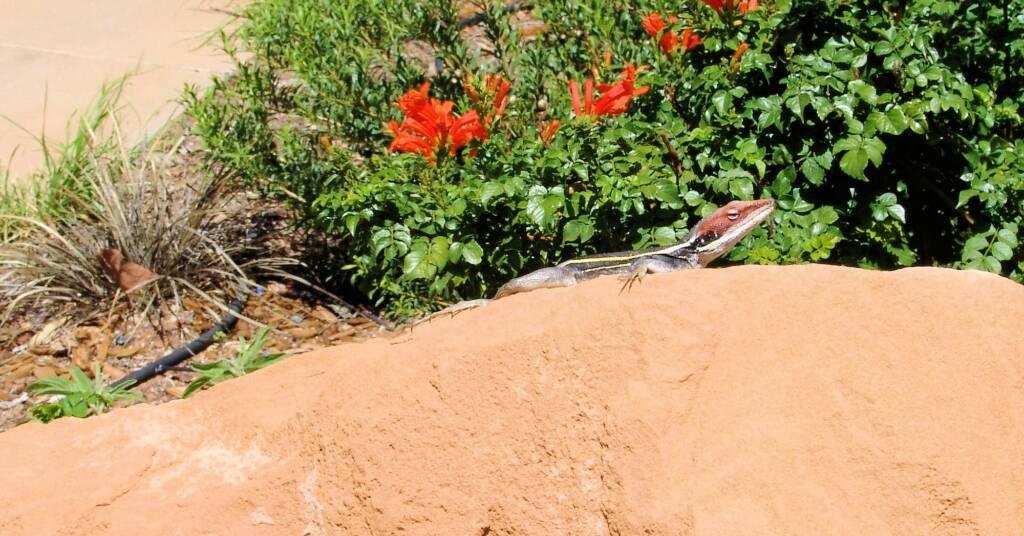 Dragon in the garden