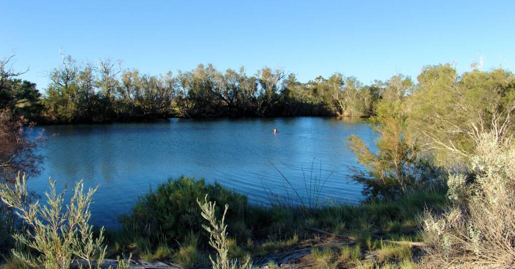 Main pool, Irrwanyere (healing waters) Dalhousie Springs