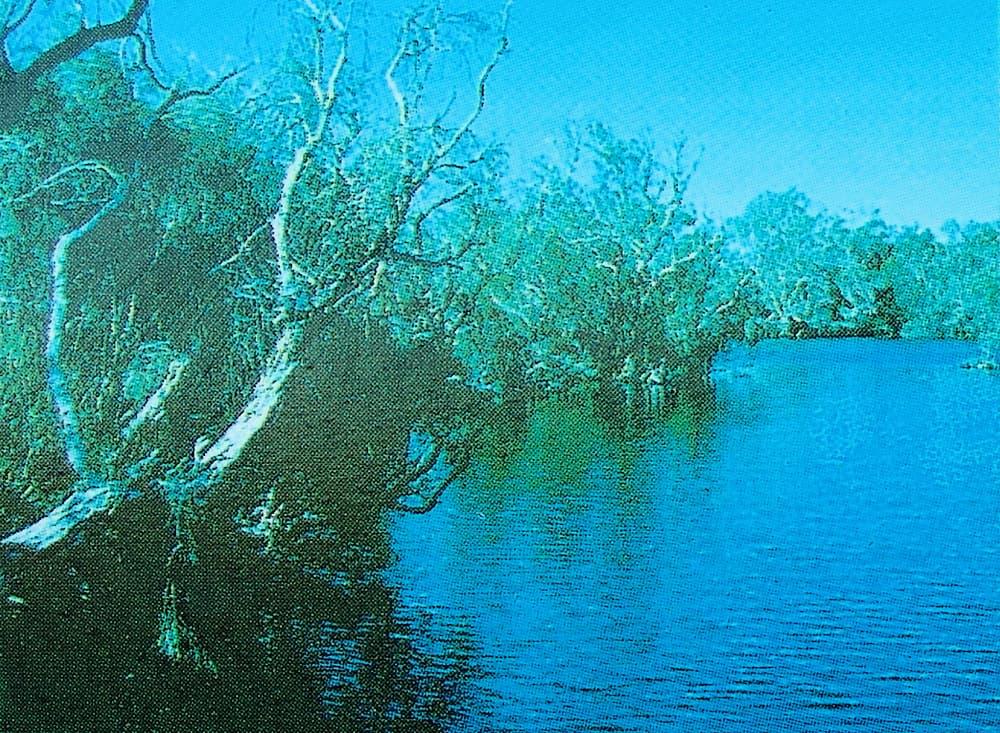 Main pool, Dalhousie Springs (from Dalhousie Springs signage)