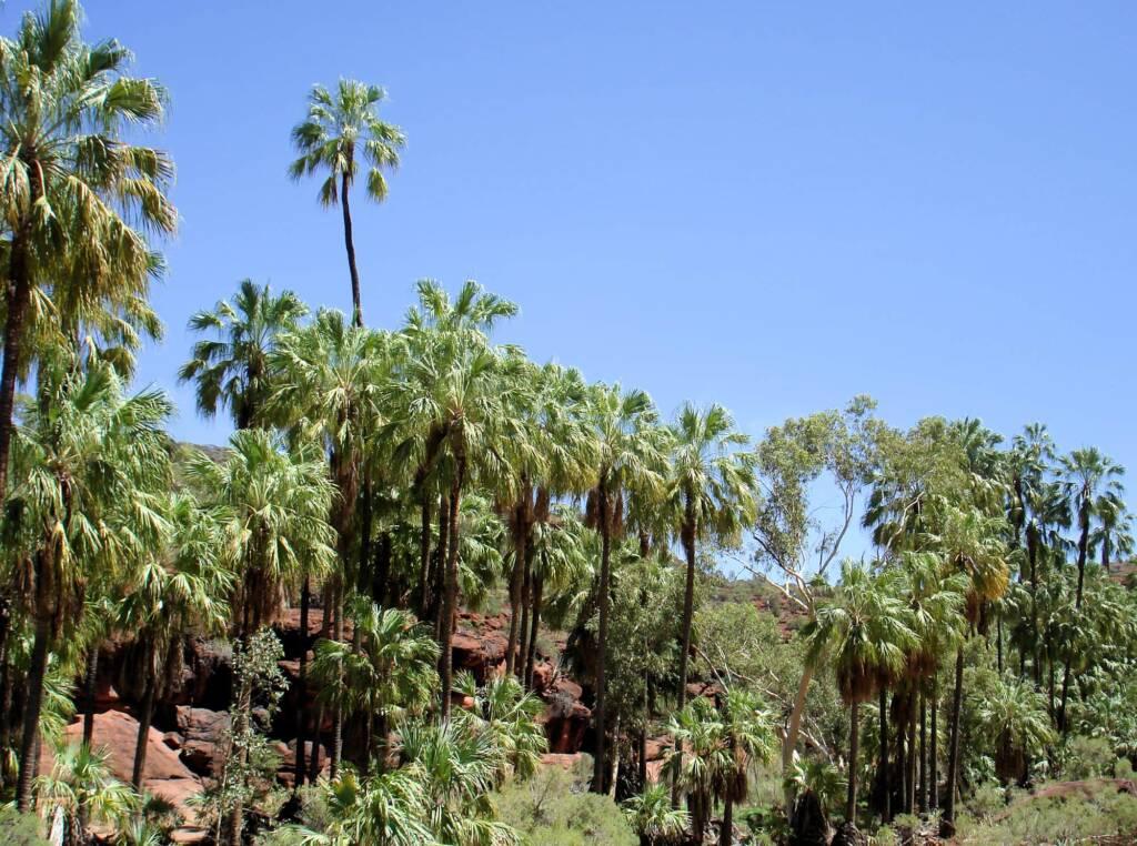 Palm Valley, Finke Gorge National Park, 2007