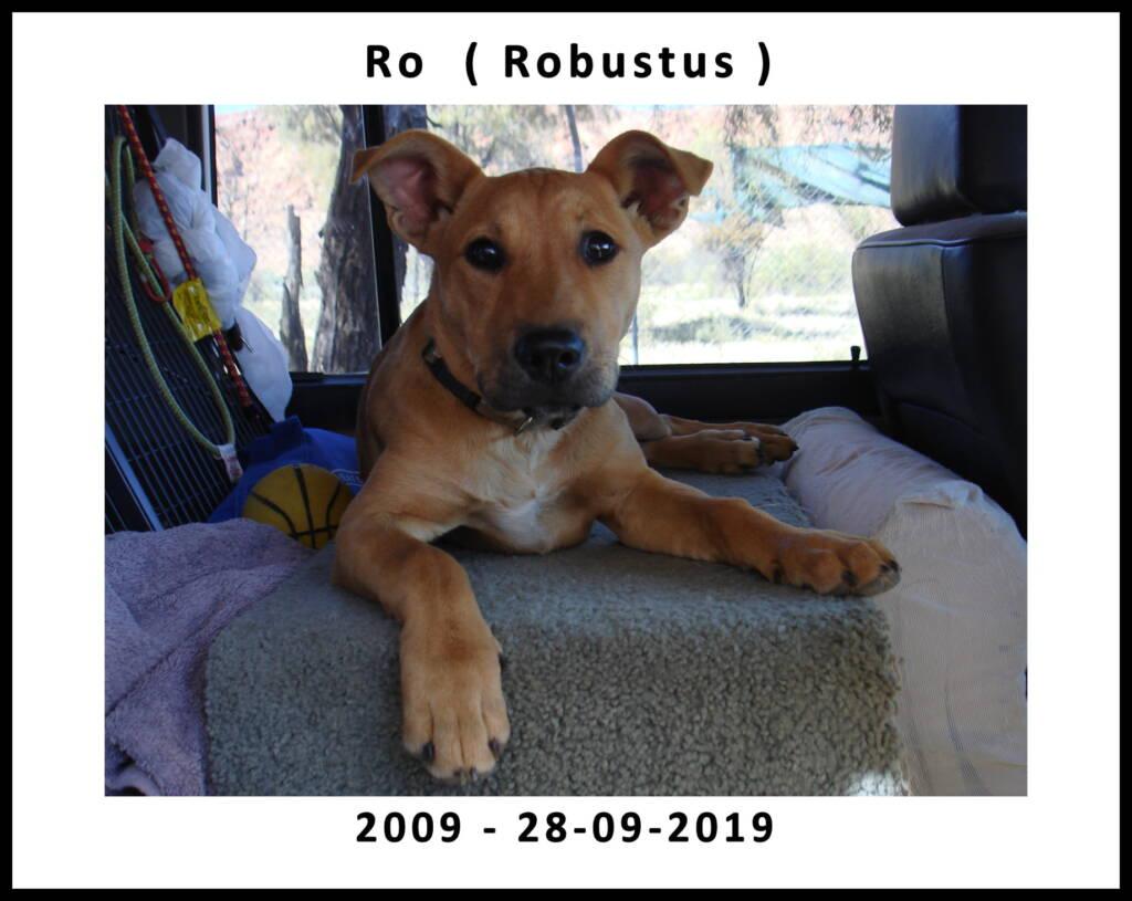 Robustus - 2009 to 28 September 2019