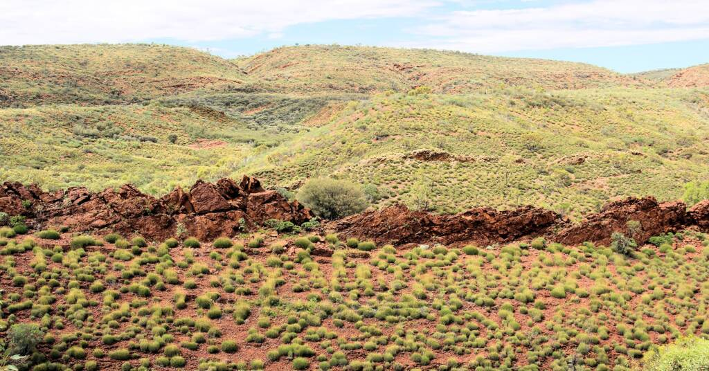 Hummock grassland - Spinifex / Triodia, West MacDonnell Ranges, NT