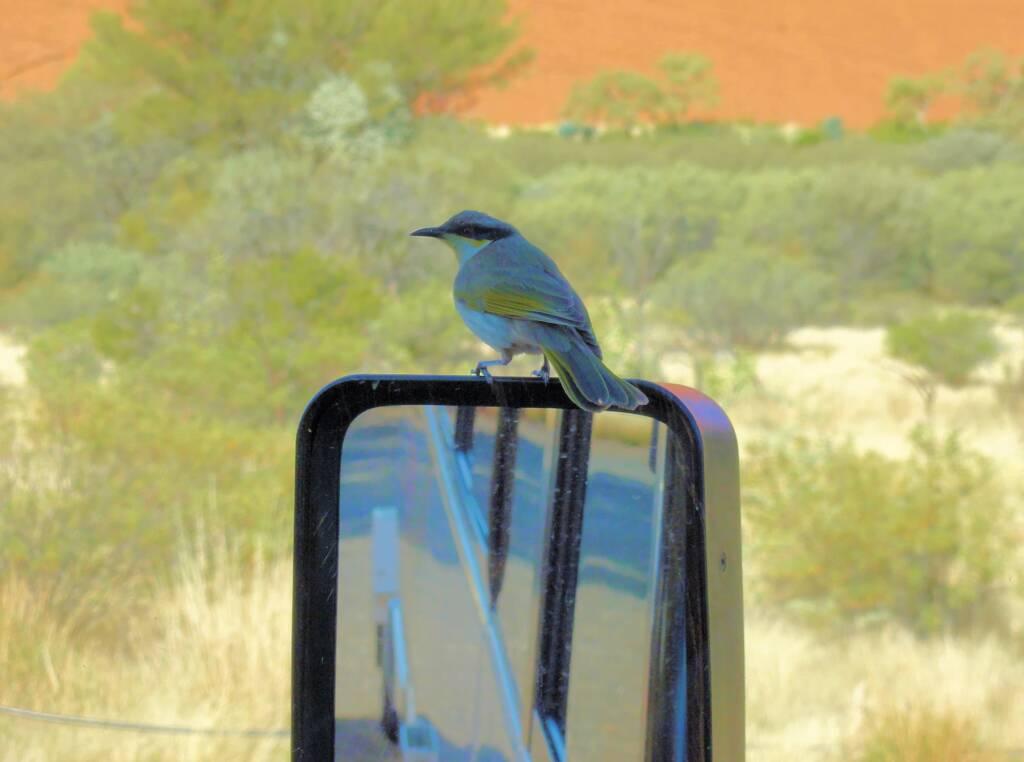 Coach tour, Central Australia