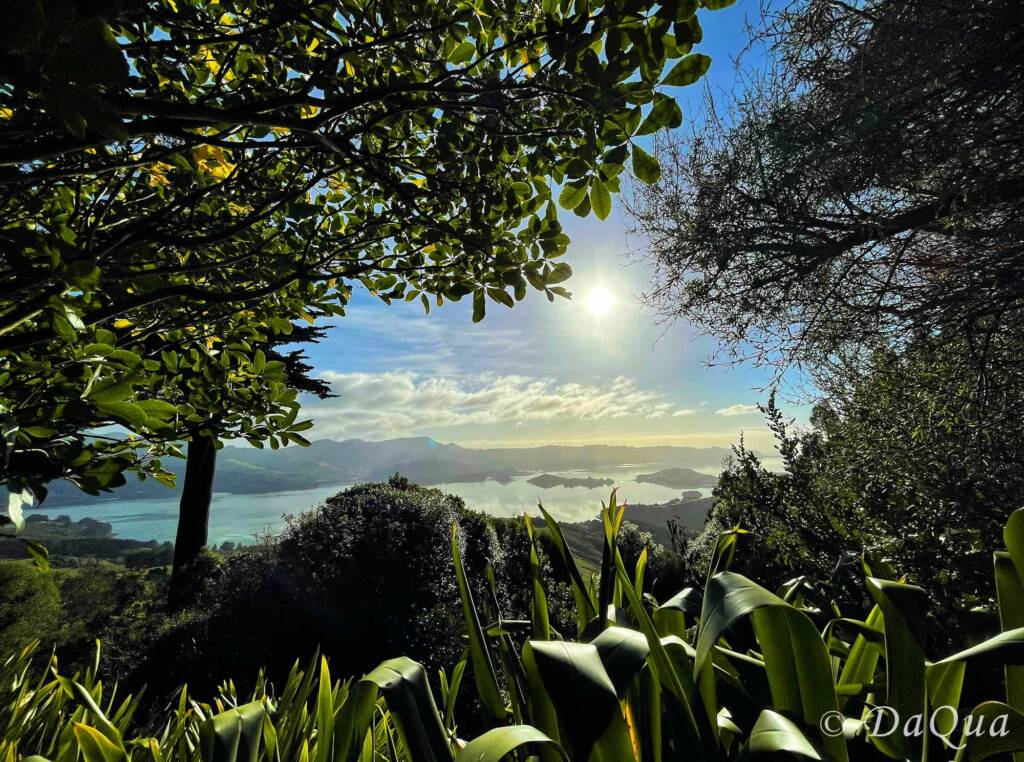 View from Larnach Castle Gardens at 300m above sea level
