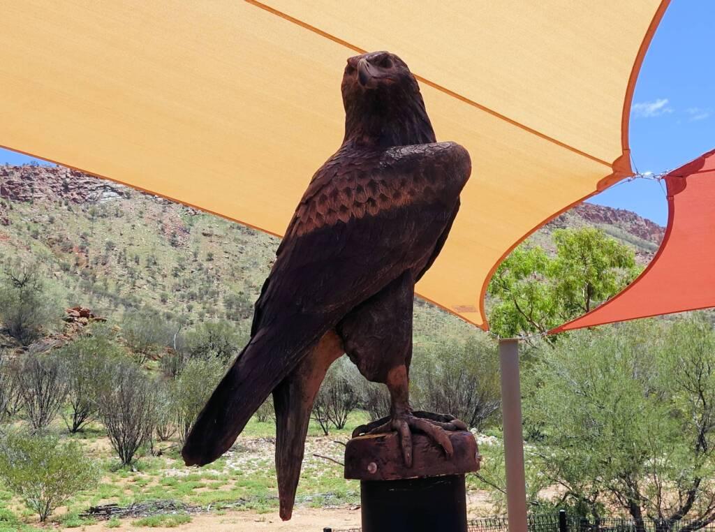 Wedge-tail eagle - Alice Springs Desert Park children playground
