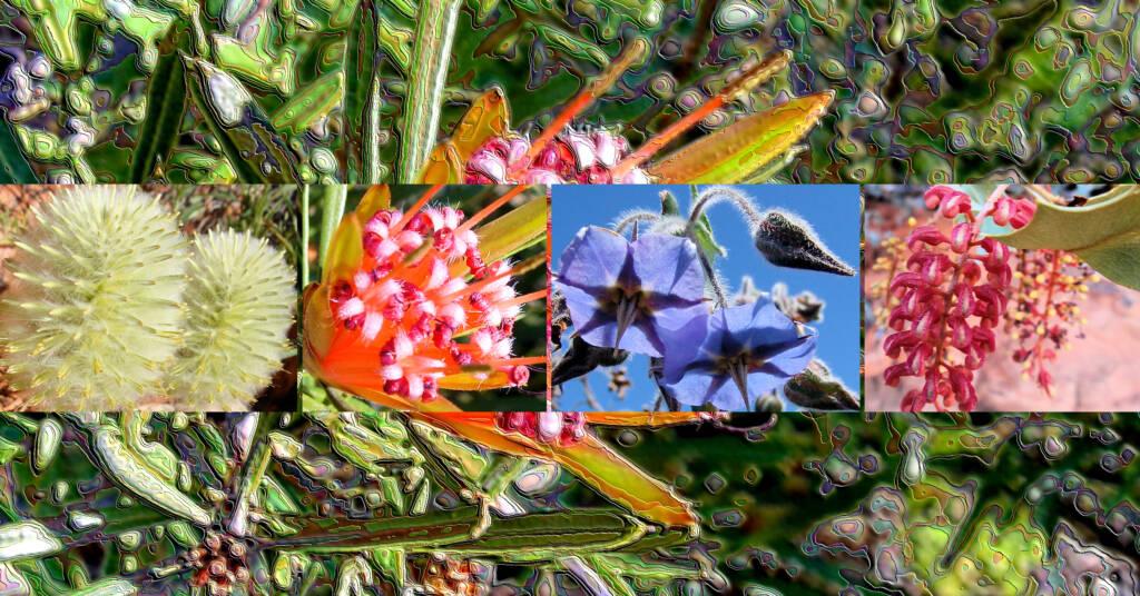 Wildflowers - Australia - Ausemade