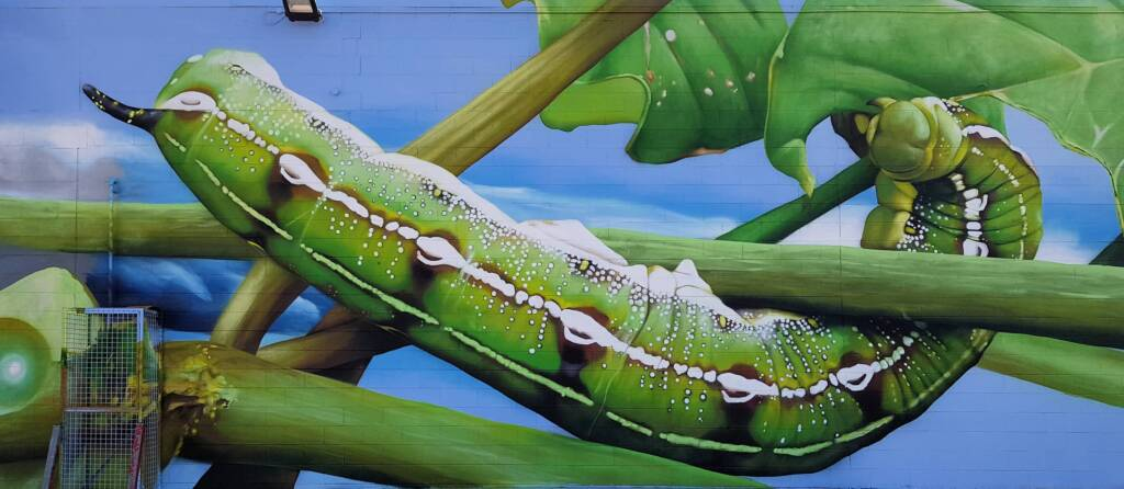 Life Cycle of the Yeperenye Caterpillar - artist Jimmy DVATE